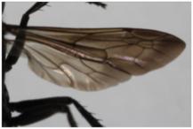 Les ailes.
