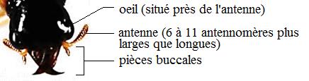 OVfigure5.tête